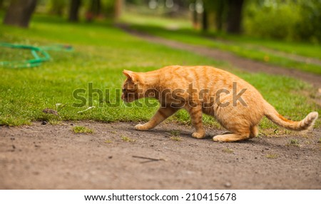 cat in the garden chasing the mouse - stock photo