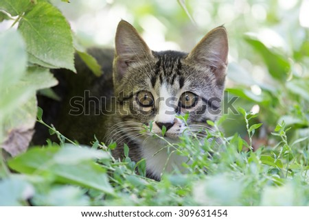 cat in the grass on the nature