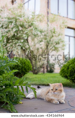 Cat in the Green Grass in Summer. Beautiful Red Cat with Green Eyes in Summer Sun Rays Outdoor - stock photo