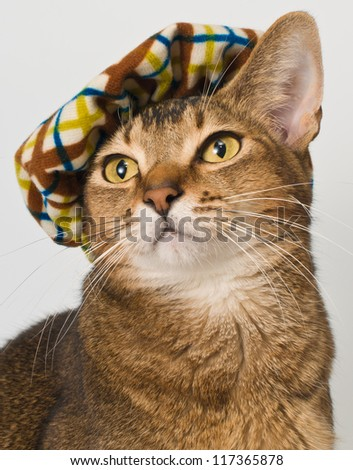 Cat in the hat - stock photo