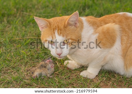 Cat in the middle of eating a mouse