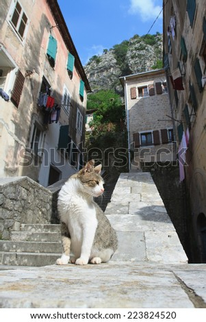 Cat in the old town of Kotor, Montenegro  - stock photo