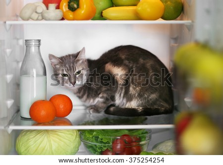 Cat in the refrigerator at home