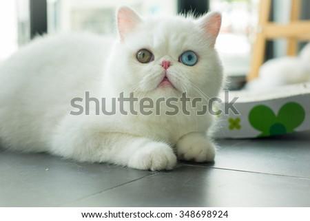 cat in the room - stock photo