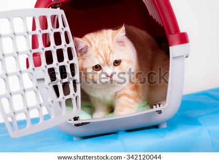 Cat in the transporter at a veterinary clinic - stock photo