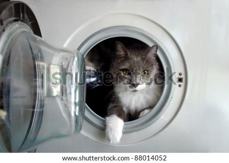 Cat in the washing machine - stock photo