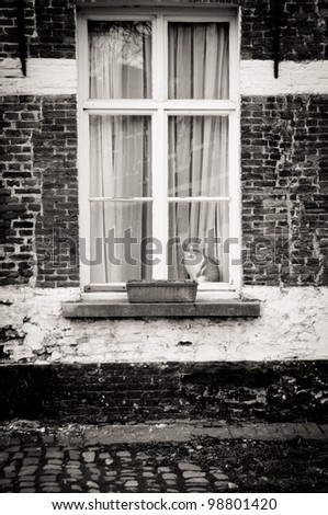 Cat in the window - stock photo