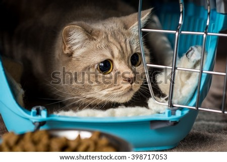 Cat inside pet carrier.