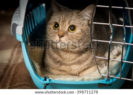 Cat inside pet carrier. Closeup of cat face.