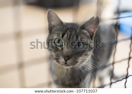 Cat inside the cage