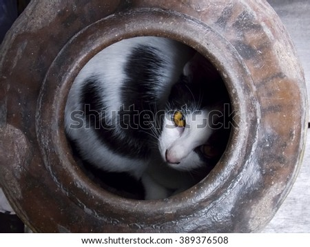 Cat inside the jar. - stock photo