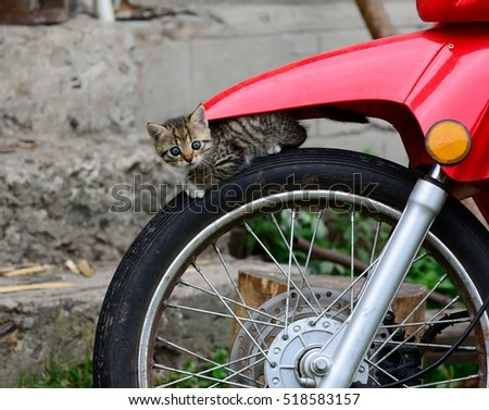 Cat inspects motorcycle wheel