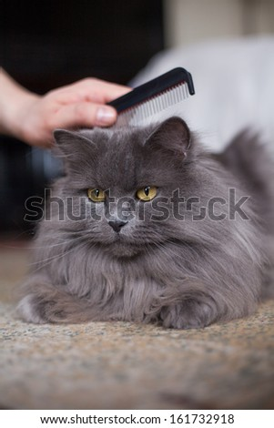 Cat is being combed. - stock photo