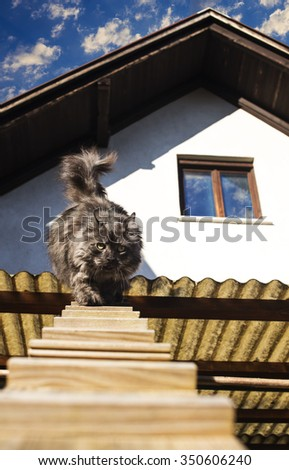 Cat is going outside of the house, using small wooden ladders. - stock photo