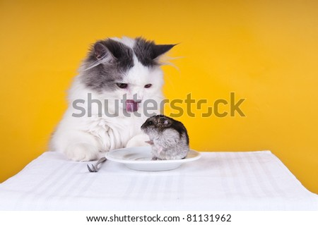 cat is going to have dinner - stock photo