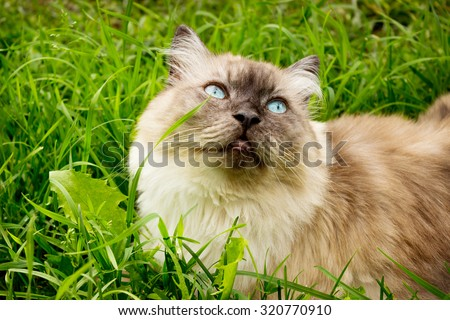 Cat is in the thick green grass and looking up - stock photo