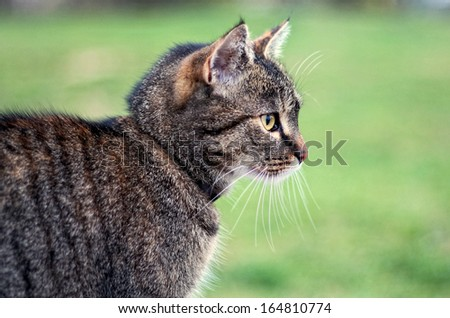 Cat is listening tensely - stock photo