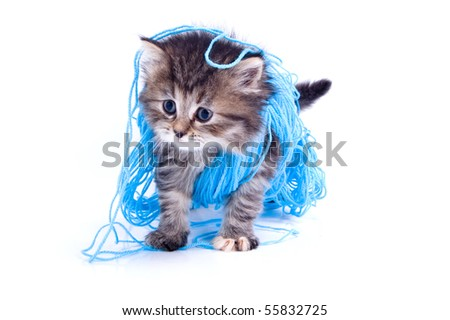 Cat is playing with a cord