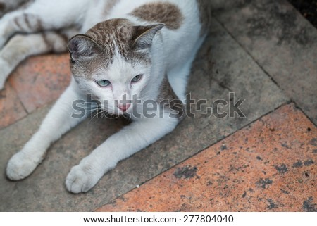 cat is resting on the floor - stock photo