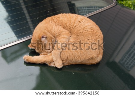 cat is sleeping in a car