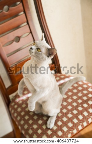 Cat is standing on the hind feet  - stock photo