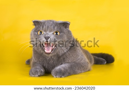 cat isolated on a yellow background - stock photo