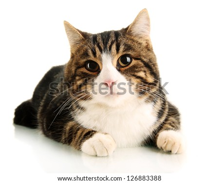 cat isolated on white - stock photo