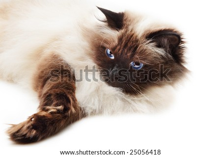 Cat isolated over white background