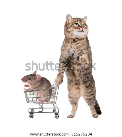 cat keeps the shopping cart that contains a field mouse. - stock photo