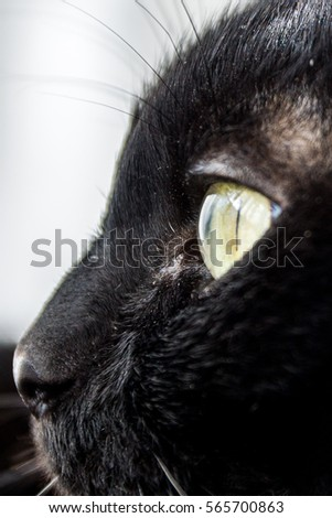 Cat Kitten Close up Stare Black, White, Grey many Colors Beautiful Eyes