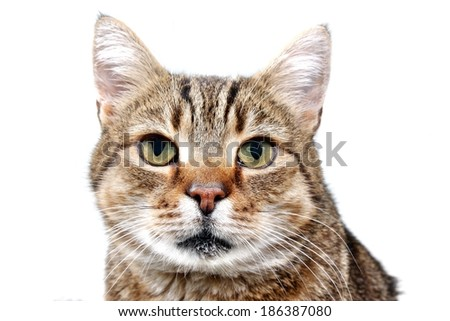 Cat kitten gaze regard glance look  head isolated - stock photo