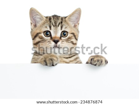 Cat kitten peeking out of a blank sign, isolated on white background - stock photo