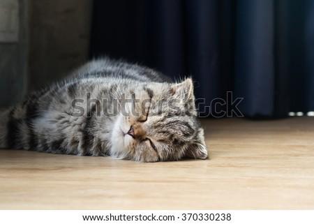 cat kitten sleep in house on wood floor - stock photo