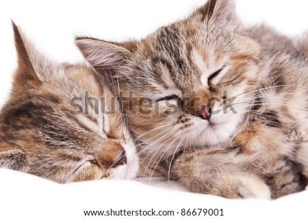 cat kitten white little nice pet two