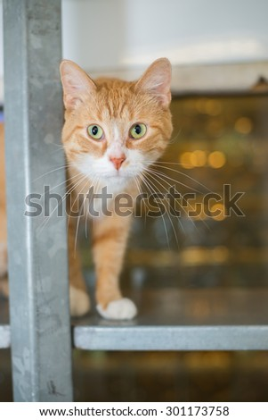 cat kitty at animal shelter housing - stock photo