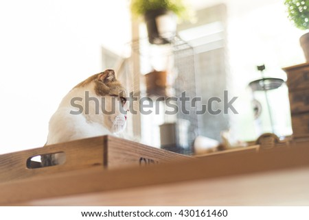 Cat lay down on wood box and look out window