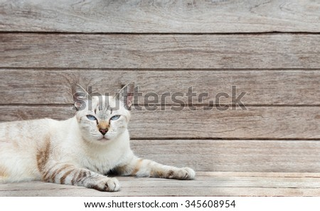 cat lay down on wood plank background - stock photo