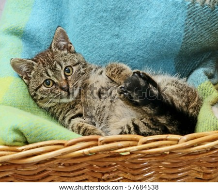cat laying in basket - stock photo