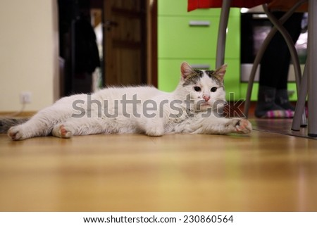Cat laying on the floor - stock photo