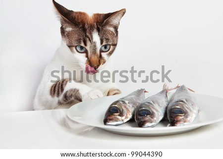 Cat licked over the fish. In the kitchen.