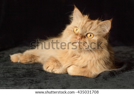 cat lies on a black background - stock photo