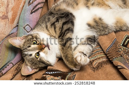 cat lies on her back - stock photo
