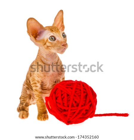 cat - little red  kitty with a red ball of wool isolated on white background - stock photo