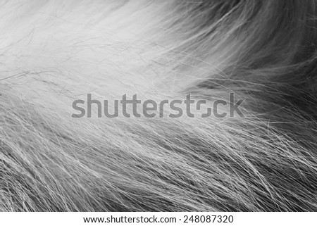 cat  long hair - stock photo