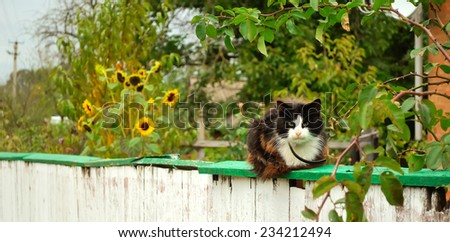 cat looking - stock photo