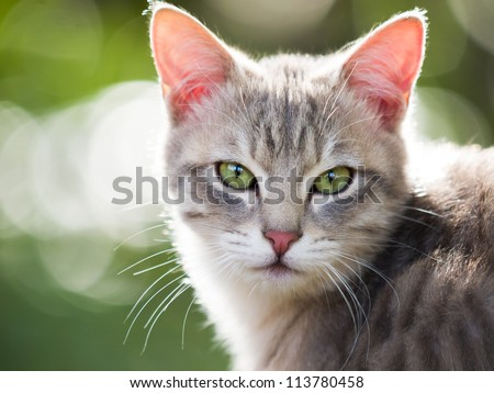 Cat Looking At Camera - stock photo