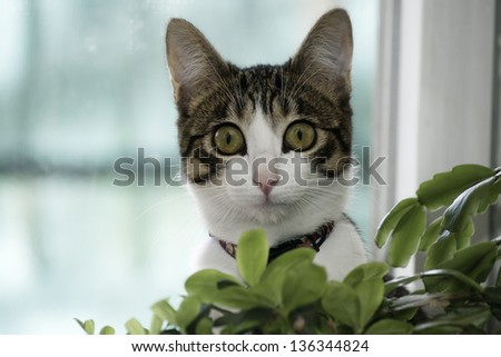 cat looking at camera behind a plant - stock photo