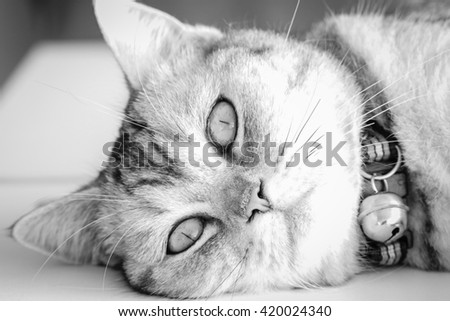 Cat Looking At Camera in black and white tone. - stock photo