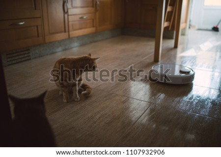 Cat Looking At Vacuum Cleaner On The Kitchen Floor Of A House