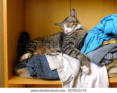 Cat looking comfortable on pile of clothes. - stock photo